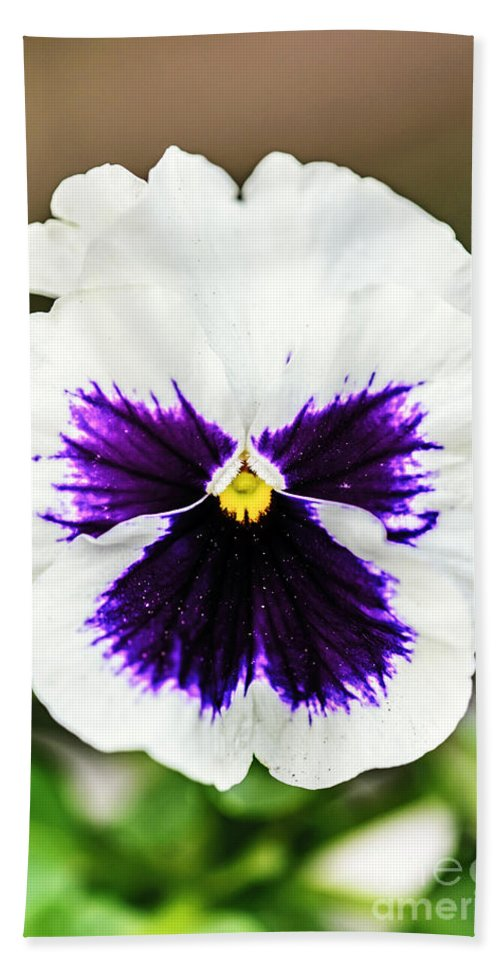 Nature Beach Towel featuring the photograph Nature's Purple Angel by Elvis Vaughn