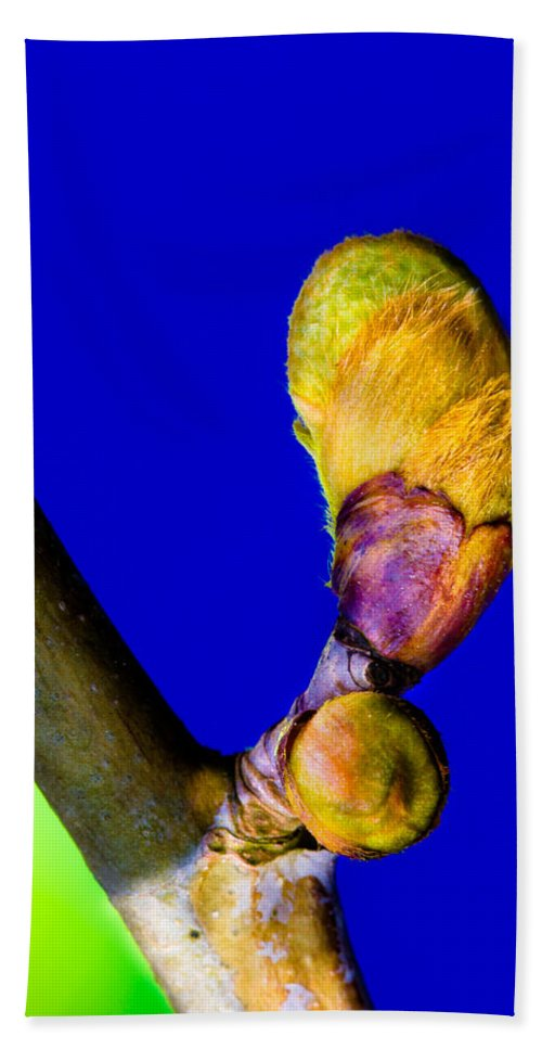 New Leaf Beach Towel featuring the photograph New Leaf by Edgar Laureano