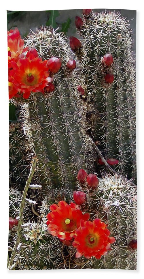 Cactus Beach Sheet featuring the photograph New Mexico Cactus by Kurt Van Wagner