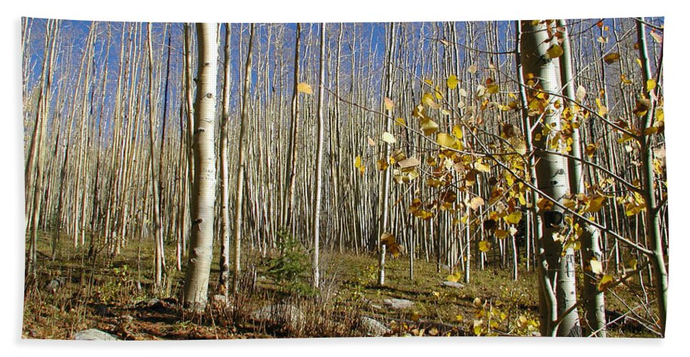Landscape Beach Towel featuring the photograph New Mexico Series - Bare Autumn by Kathleen Grace