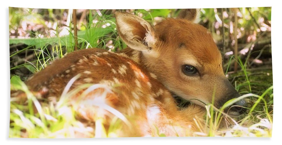 Fawn Beach Towel featuring the photograph Newborn Fawn by Angie Rea