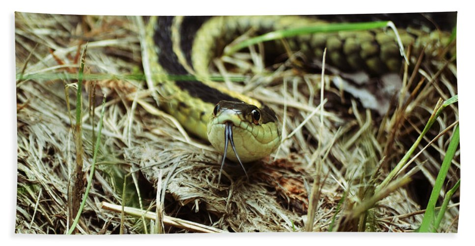 Garter Beach Towel featuring the photograph Nice To Sssssee You by Kevin Fortier