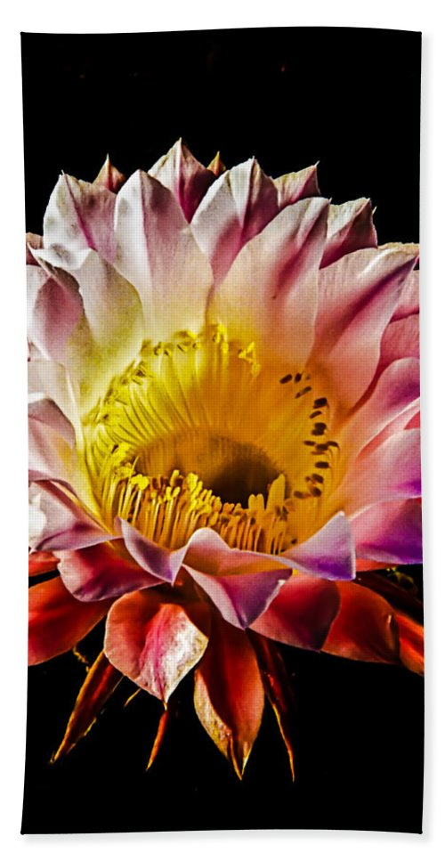 Cactus Beach Towel featuring the photograph Night Bloomer by Robert Bales