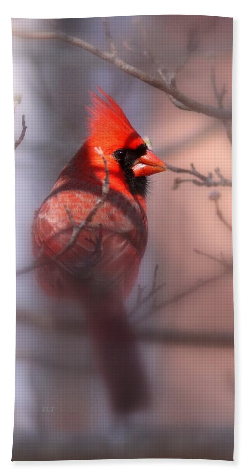 Northern Cardinal Beach Towel featuring the photograph Northern Cardinal Dominent Male by Travis Truelove