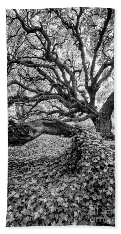 Los Osos Beach Towel featuring the photograph Oak And Ivy Bw by Timothy Hacker