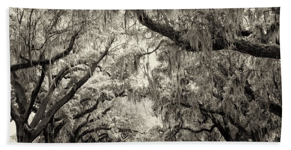 Charleston Beach Towel featuring the photograph Oak Trees Of Charleston South Carolina In Sepia by Stephanie McDowell