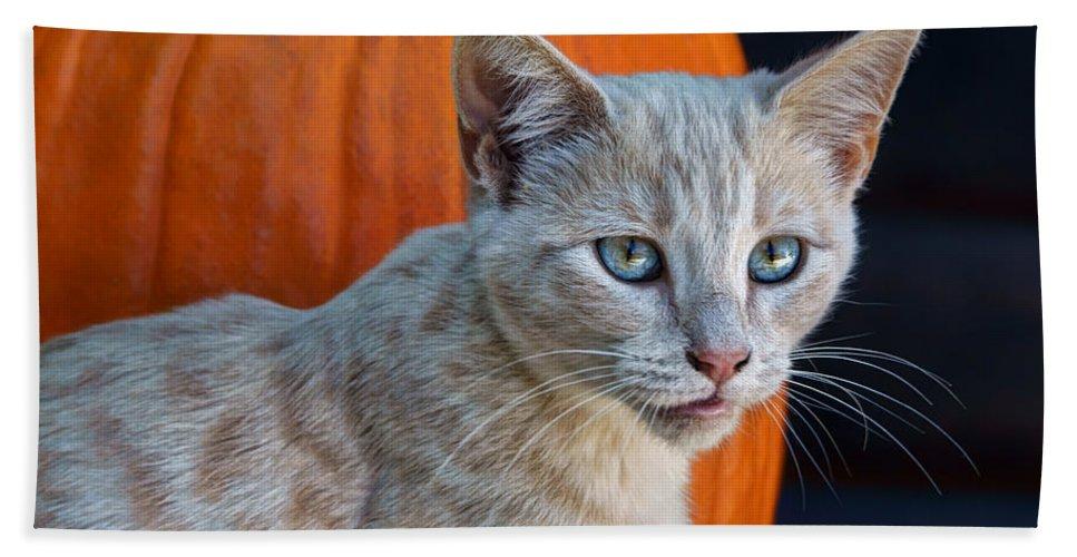 Kitten Beach Towel featuring the photograph October Kitten #3 by Nikolyn McDonald