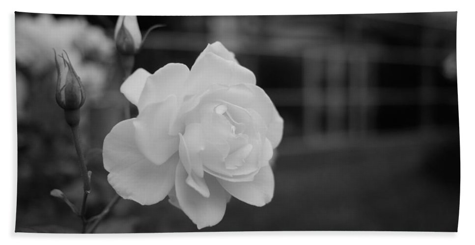 Miguel Beach Towel featuring the photograph Office Roses by Miguel Winterpacht
