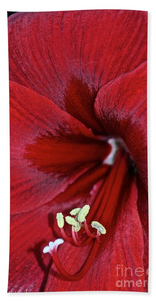 Flower Beach Towel featuring the photograph Oh So Red by Susan Herber