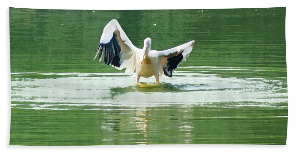 Delhi Beach Towel featuring the digital art Oil Painting - Pelican Flapping Its Wings by Ashish Agarwal