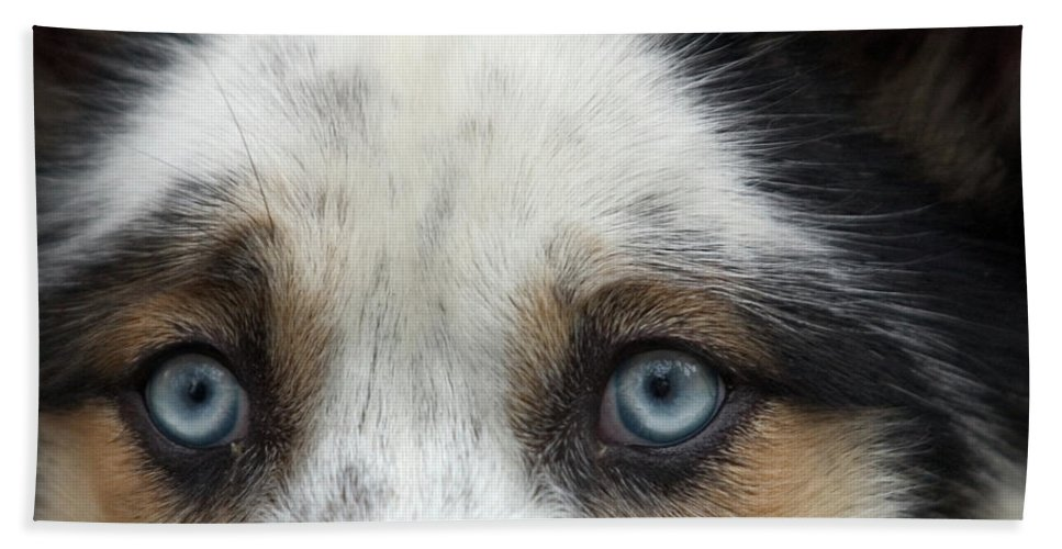 Animal Beach Towel featuring the photograph Old Blue Eyed Dog by John Harmon