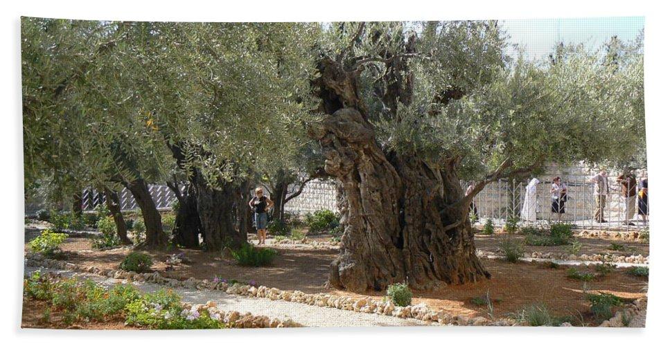 Jerusalem Beach Towel featuring the photograph Olive Garden by Katerina Naumenko