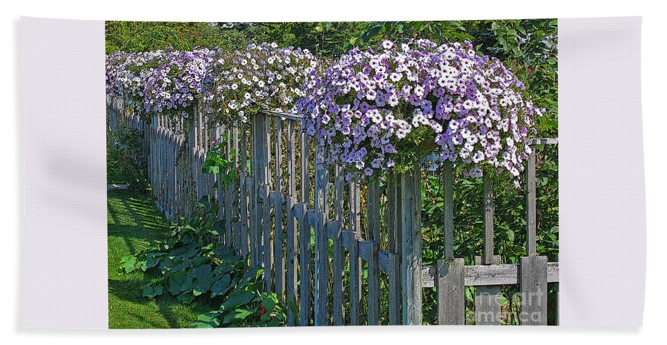 Petunia Beach Towel featuring the photograph On The Fence by Ann Horn
