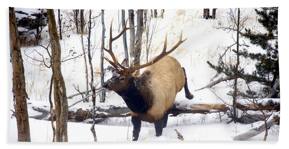 Elk Beach Towel featuring the photograph On The Move by Mike Dawson