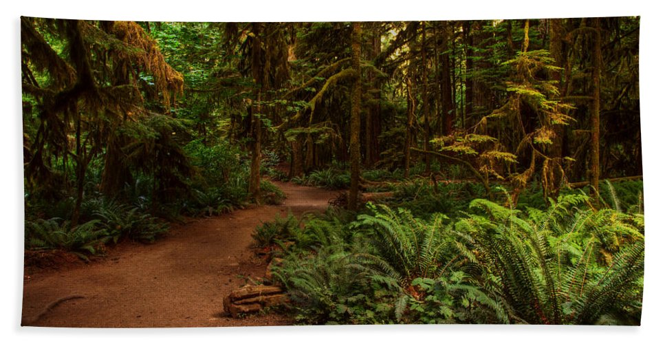 Forest Beach Towel featuring the photograph On The Trail To .... by Randy Hall