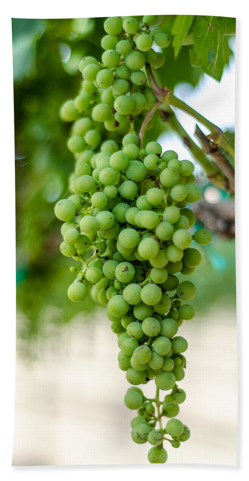 Grapes Beach Towel featuring the photograph On The Vine by David Morefield