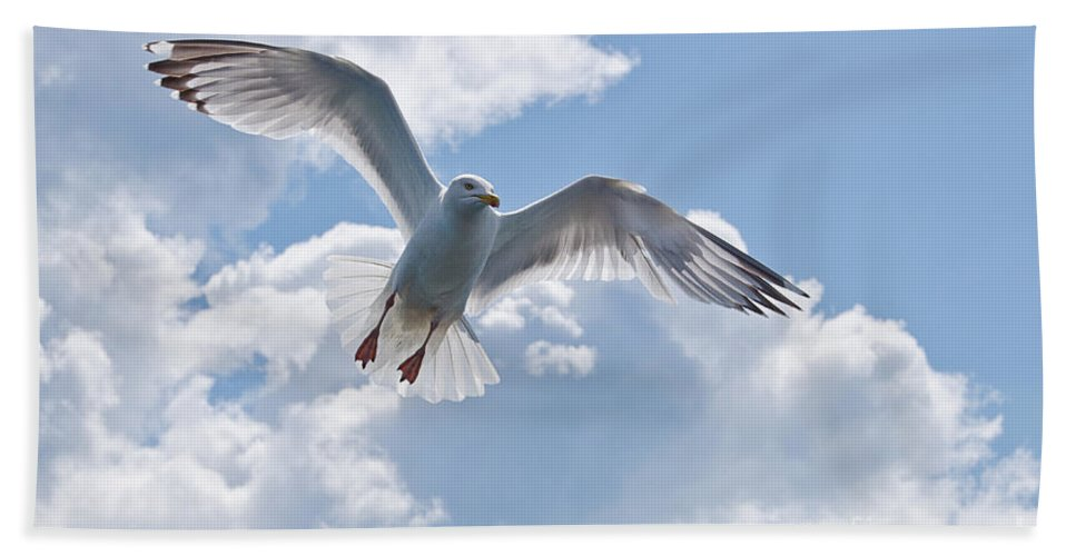 Marie F Beach Towel featuring the photograph On The Wings Of A Gull by Susie Peek