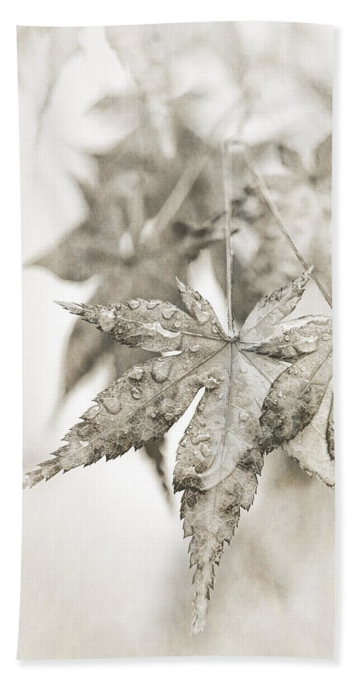 Autumn Leaves Beach Towel featuring the photograph One Misty Moisty Morning by Caitlyn Grasso