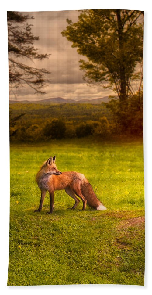 Fox Beach Towel featuring the photograph One Red Fox by Bob Orsillo