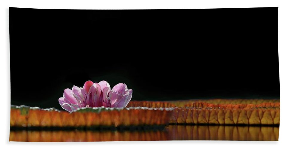 Water Lily Beach Towel featuring the photograph One Water Lily by Sabrina L Ryan
