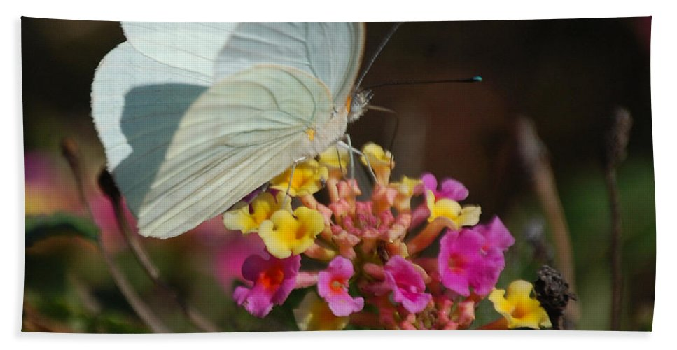 Wings Beach Towel featuring the photograph Open Wings by Leticia Latocki