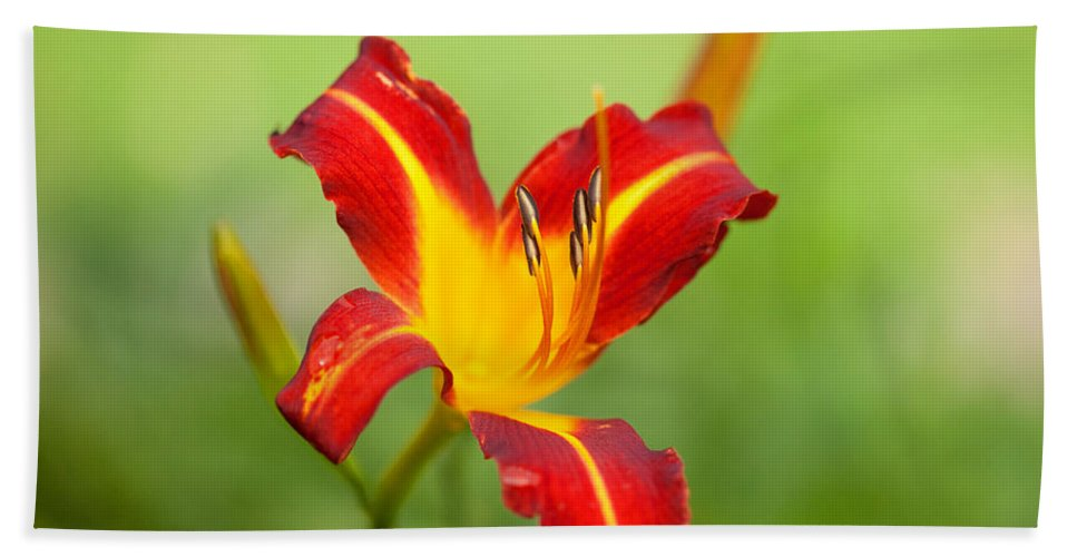 Flowers Beach Towel featuring the photograph Opens With Life by Karol Livote