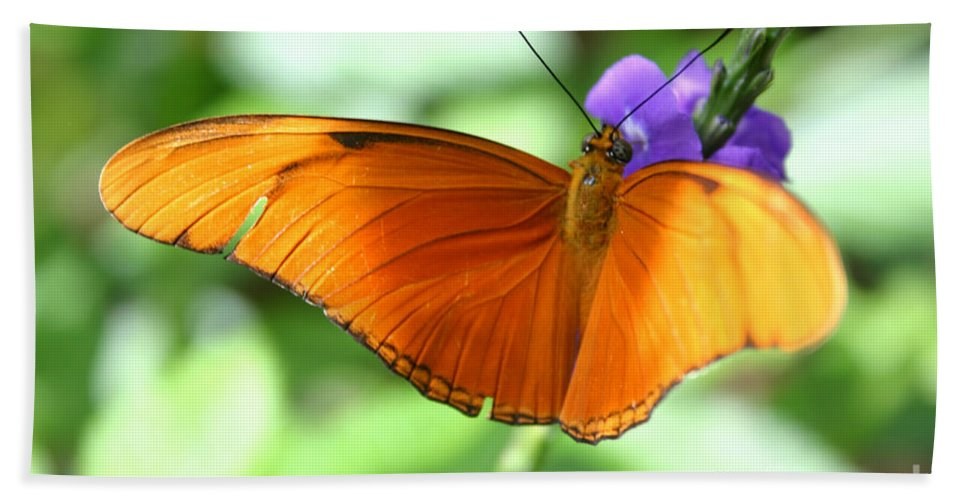 Alyce Taylor Beach Towel featuring the photograph Orange Julia Butterfly by Alyce Taylor