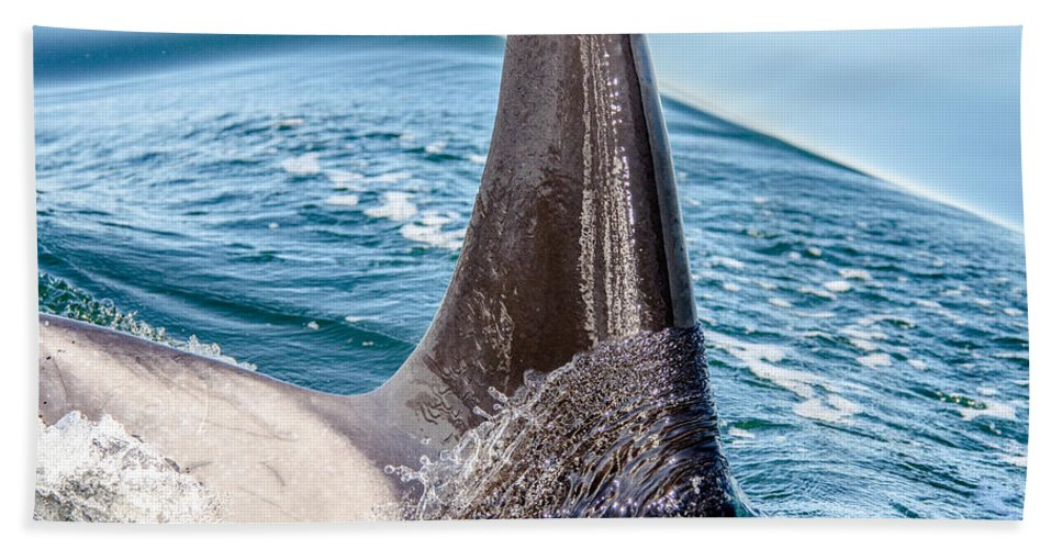 Orca Beach Towel featuring the photograph Orca Apex II by Roxy Hurtubise