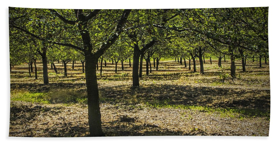 Art Beach Towel featuring the photograph Orchard In West Michigan No. 279 by Randall Nyhof