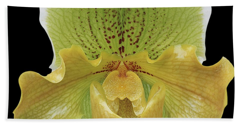 Beach Towel featuring the photograph Orchid 003 by Ingrid Smith-Johnsen