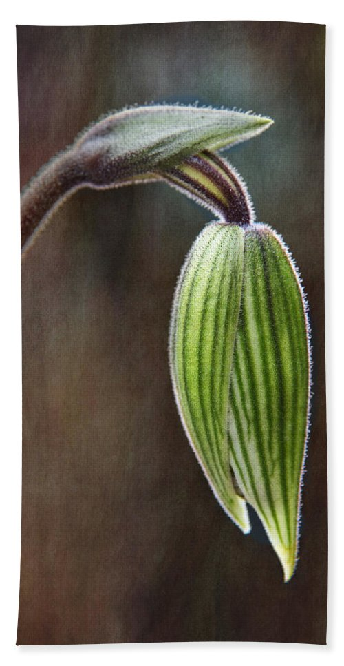 Orchid Bud Beach Towel featuring the photograph Orchid Bud by Dale Kincaid