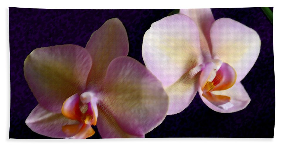 Orchid Beach Towel featuring the photograph Orchid Light by Steve Karol