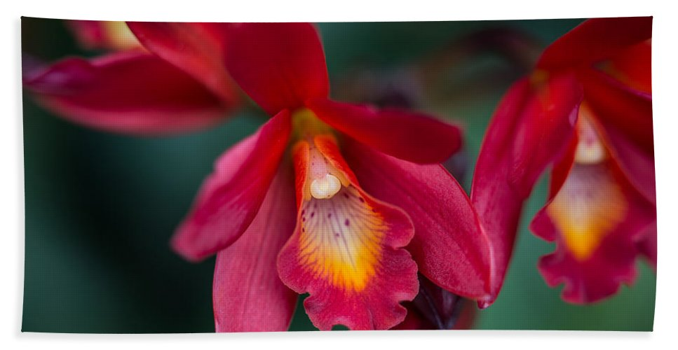 Orchid Love Beach Towel featuring the photograph Orchid Love by Dale Kincaid
