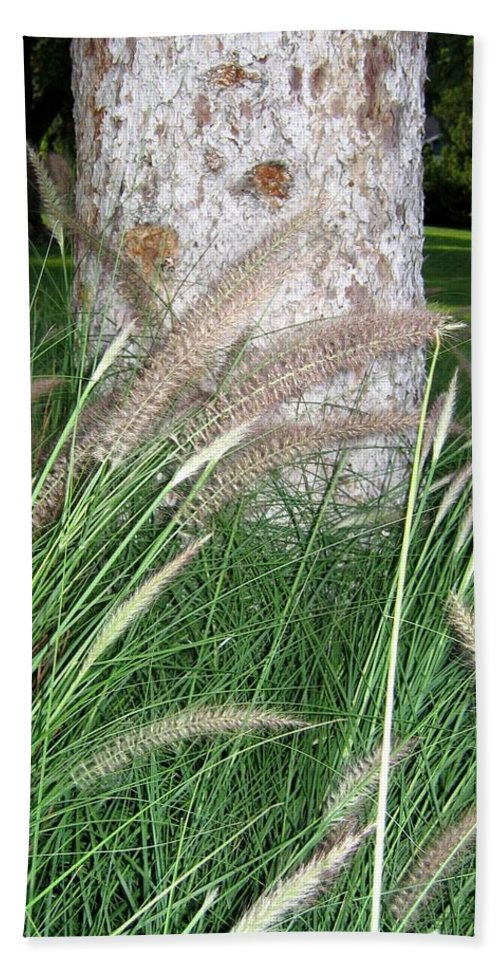 Ornamental Grass Beach Towel featuring the photograph Ornamental Grass by Will Borden