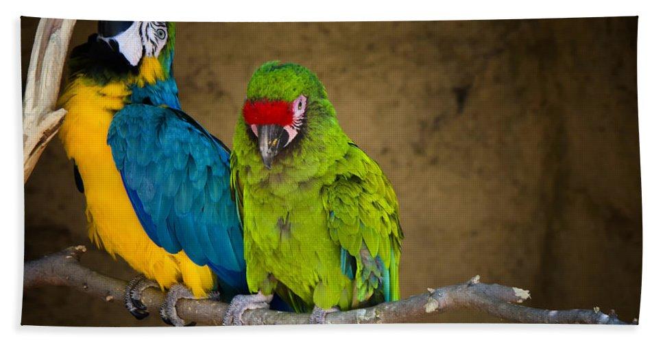 Macaws Beach Towel featuring the photograph Out On A Limb by Saija Lehtonen