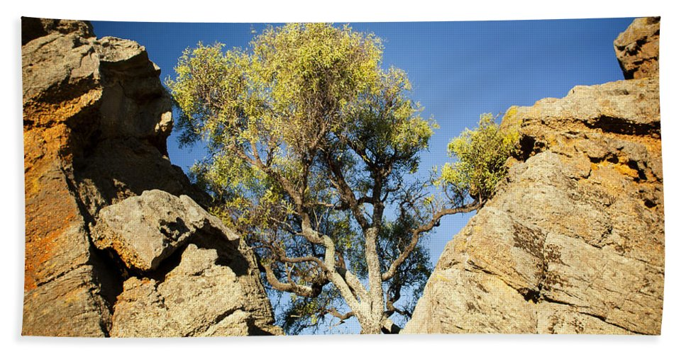 Australia Beach Towel featuring the photograph Outback Tree by Tim Hester
