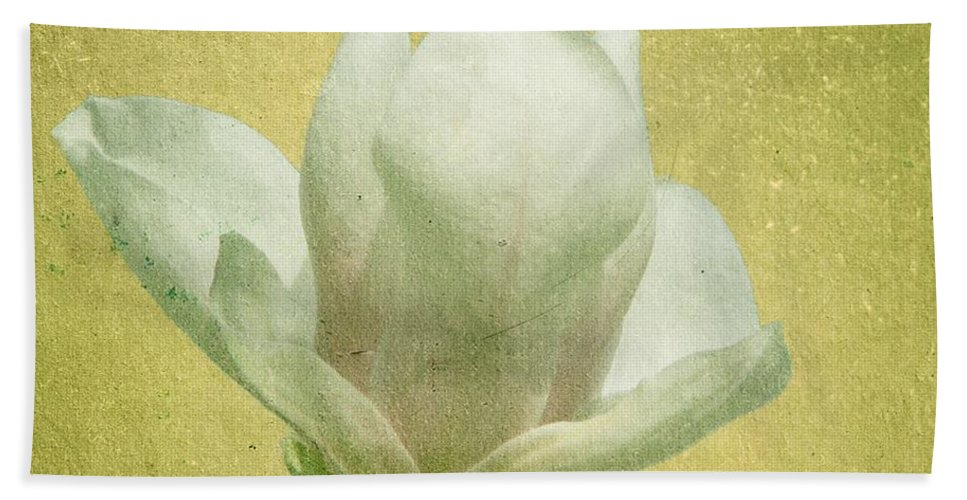 Bloom Beach Towel featuring the photograph Outer Magnolia by Jeffrey Kolker