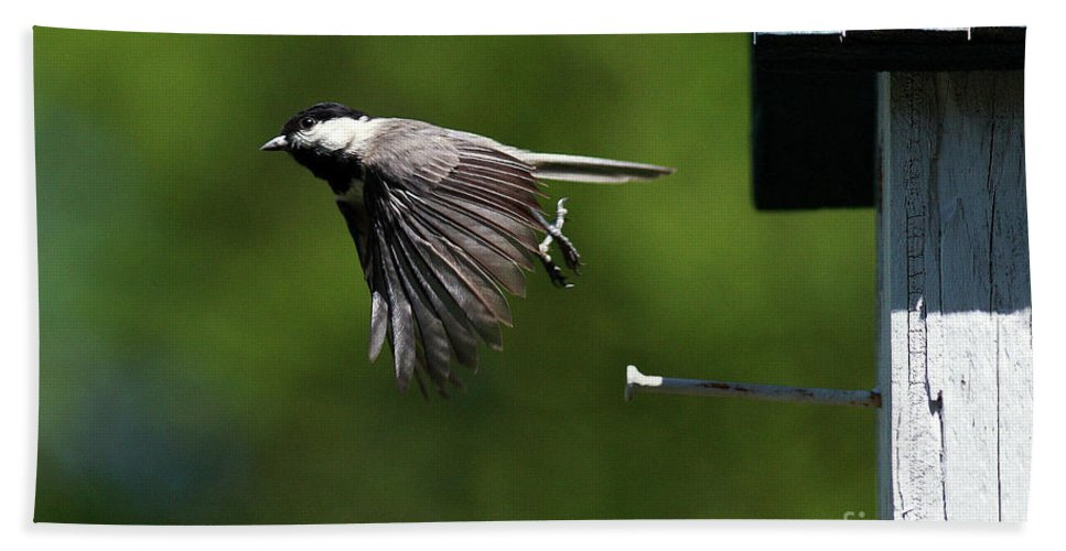 Chickadee Beach Towel featuring the photograph Outgoing by Douglas Stucky