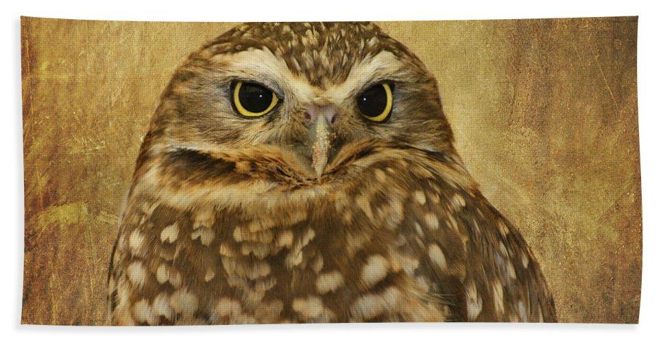 Owl Beach Towel featuring the photograph Owl by Kim Hojnacki