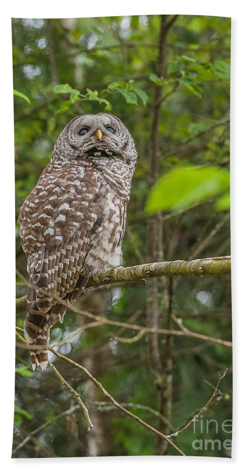 Owl Beach Towel featuring the photograph Up - Owl by Rod Wiens