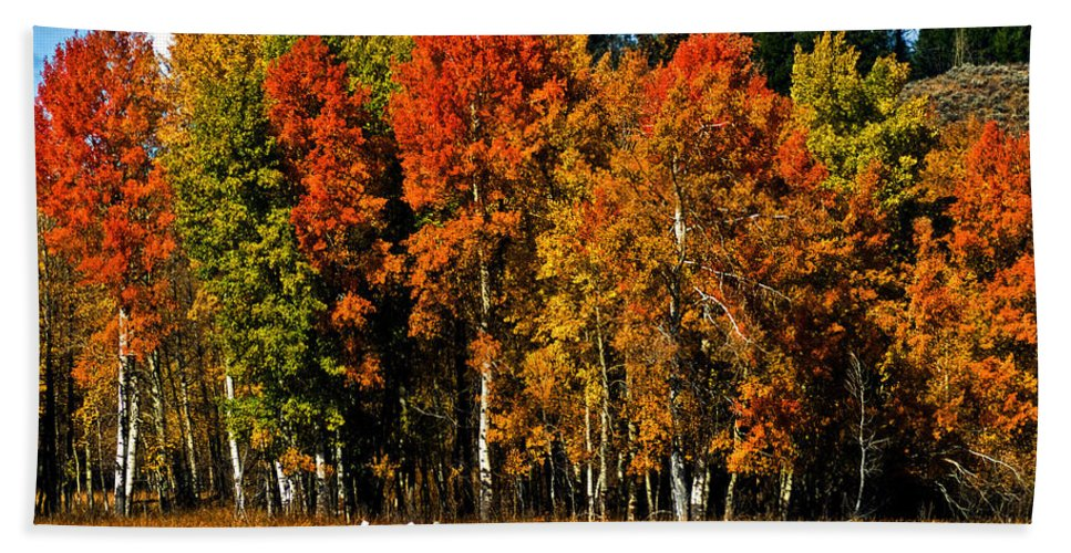 Aspens Beach Towel featuring the photograph Oxbow Autumn by Brian Kerls