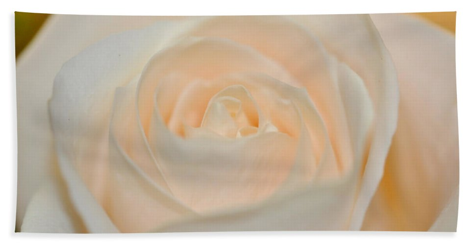 Petal Beach Towel featuring the photograph Pale Perfection by Teri Schuster
