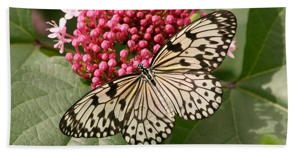 Butterfly Beach Towel featuring the photograph Paper Kite Butterfly by Kim Hojnacki