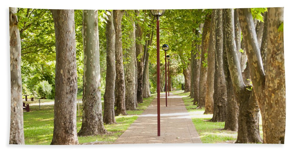 Trees Beach Towel featuring the photograph Park Footpath by Tim Hester