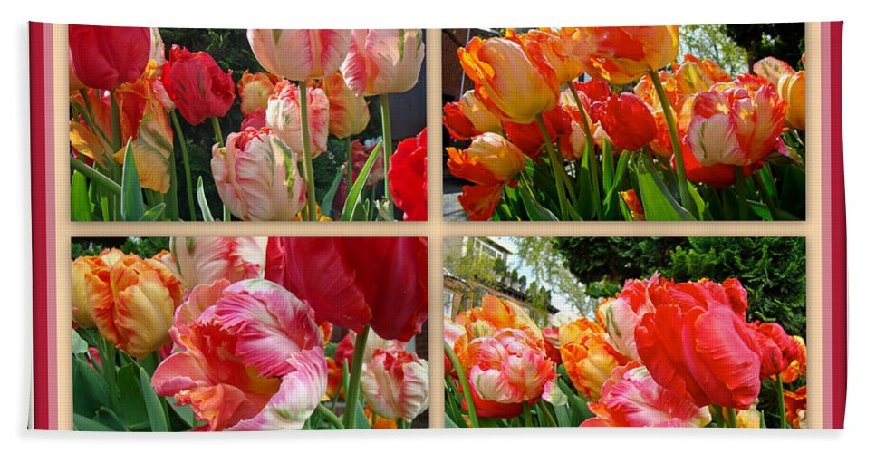 Tulips Beach Towel featuring the photograph Parrot Tulips In Springtime Philadelphia by Mother Nature
