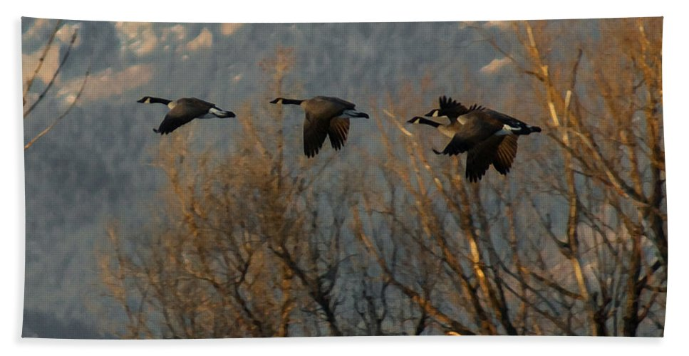 Birds Beach Towel featuring the digital art Passing Through by Ernie Echols