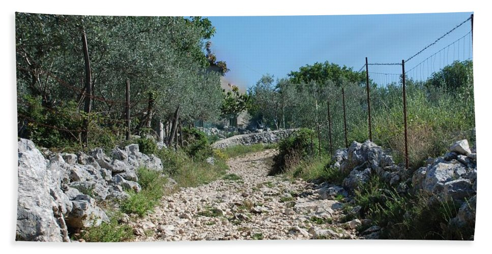 Path Beach Towel featuring the photograph Path Among Olive Trees by Dany Lison