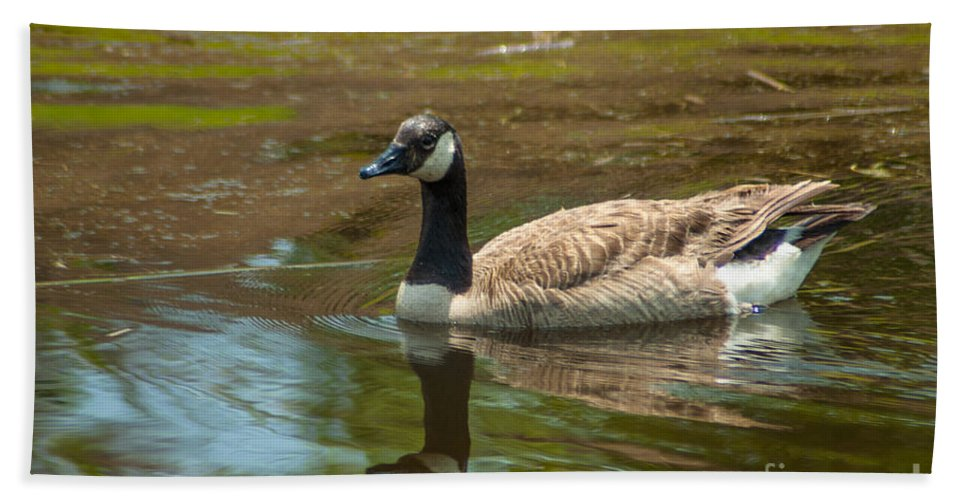 Goose Beach Towel featuring the photograph Peaceful Reflections by Dale Powell