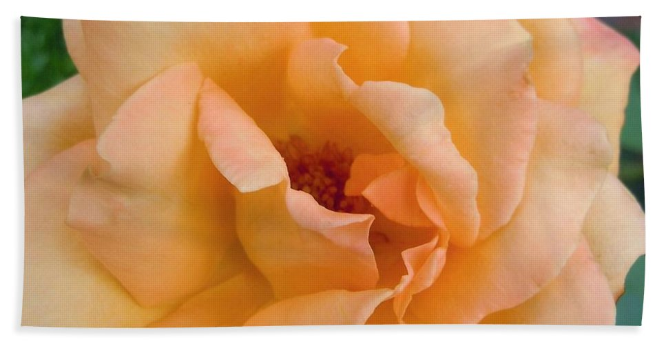 Rose Beach Towel featuring the photograph Peach Enchantment by Robert ONeil