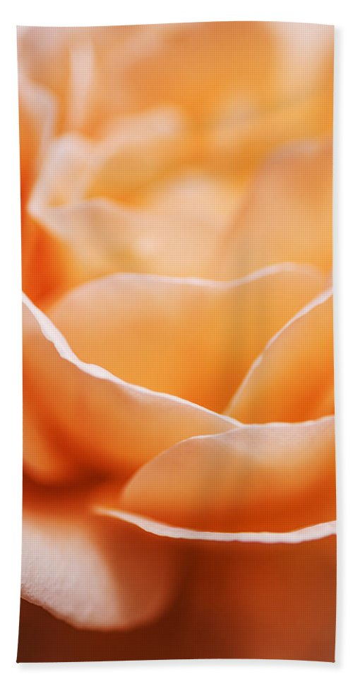 Rose Beach Towel featuring the photograph Peach Rose by Vishwanath Bhat